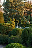 BRODSWORTH HALL, YORKSHIRE: DAWN. WINTER, JANUARY, TOPIARY EVERGREEN, BORDER, FORMAL, GARDEN, COUNTRY, CLIPPED, CEDAR OF LEBANON, TREE