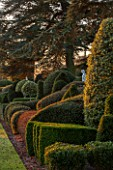 BRODSWORTH HALL, YORKSHIRE: DAWN. WINTER, JANUARY, TOPIARY EVERGREEN, BORDER, FORMAL, GARDEN, COUNTRY, CLIPPED, HEDGE, HEDGES, HEDGING, STATUE, CEDAR OF LEBANON