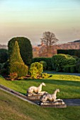 BRODSWORTH HALL, YORKSHIRE: VIEW ACROSS LAWN TO BORDER OF TOPIARY. VICTORIAN, COUNTRY, GARDEN, FORMAL, STATUARY, STATUES, DOGS, CLIPPED, COUNTRYSIDE, EVENING