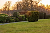 BRODSWORTH HALL, YORKSHIRE: VIEW ACROSS LAWN TO BORDER OF CLIPPED EVERGREEN TOPIARY. VICTORIAN, COUNTRY, GARDEN, COUNTRYSIDE, EVENING