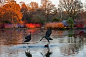 RHS GARDEN, WISLEY, SURREY: BIRD SCULPTURES IN THE LAKE AT SEVEN ACRE, IN WINTER. ART, WATER, REFLECTION, REFLECTED, REFLECTIONS, JANUARY, SCULPTURE, LAKE, POND, POOL, CORNUS