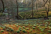 PAINSWICK ROCOCO GARDEN, GLOUCESTERSHIRE: WOOD WITH SNOWDROPS. WHITE, FLOWERS, WINTER, JANUARY, GALANTHUS, WOODLAND, DRIFTS, MAZE