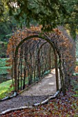 PAINSWICK ROCOCO GARDEN, GLOUCESTERSHIRE: PATH THROUGH BEECH ARCH BESIDE THE LAKE. PATHS, ARCHES, TUNNEL, PERGOLA, WALKWAY