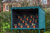 HILL CLOSE GARDENS, WARWICK: WOODEN SNOWDROP THEATRE - GALANTHUS, WINTER, FORMAL, CLASSIC, TERRACOTTA, CONTAINERS, POTS