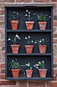 HILL CLOSE GARDENS, WARWICK: WOODEN SNOWDROP THEATRE AGAINST WALL. GALANTHUS, WINTER, FORMAL, CLASSIC, TERRACOTTA, CONTAINERS, POTS
