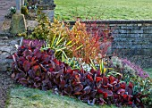 COLESBOURNE PARK, GLOUCESTERSHIRE:WINTER BORDER IN FEB BY LAWN - BERGENIA, PHORMIUM, CORNUS, HEATHER. PLANT ASSOCIATION, COMBINATION, RED, LEAVES