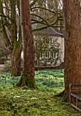 ABLINGTON MANOR, GLOUCESTERSHIRE: GAZEBO, SUMMER HOUSE IN FRENCH STYLE SEEN THROUGH WOODS - CLASSIC COUNTRY GARDEN, ROMANCE, ROMANTIC, WINTER, MOSS, FEBRUARY, PRIMROSES
