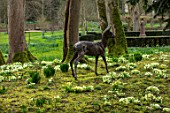 ABLINGTON MANOR, GLOUCESTERSHIRE: LIFELIKE BRONZE SCULPTURE OF ROE DEER BY HAMISH MACKIE IN WOODLAND WITH YELLOW PRIMROSES - ORNAMENT, FOCAL POINT, SHADE, SHADY, PRIMULA, VULGARIS