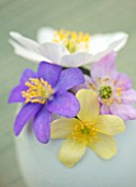 AVONDALE NURSERIES, COVENTRY: EGG WITH ANEMONE NEMEROSA TILO, LISMORE BLUE, GRANDIFLORA AND ANEMONE X LIPSIENSIS VINDOBONENSIS. WINDFLOWER, PERENNIAL, STYLED, STILL LIFE, SPRING