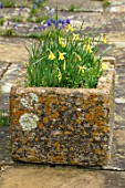 ABLINGTON MANOR, GLOUCESTERSHIRE: STONE TERRACE AND TROUGH WITH NARCISSUS HAWERA. SPRING, ENGLISH, GARDEN, COUNTRY, DAFFODILS, PATIO, BULBS, CONTAINER