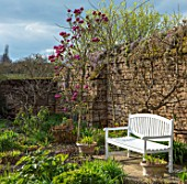 FELLEY PRIORY, NOTTINGHAMSHIRE: WALLED GARDEN WITH WHITE WOODEN BENCH, SEAT AND PINK MAGNOLIA BLACK TULIP. TREE, SPRING, ENGLISH, COUNTRY, GARDEN, FLOWERS, BLOOMS