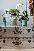 LONDON HOUSE DESIGNED BY JULIE SIMONSEN. DETAIL OF ORCHIDS IN POTS ON VINTAGE STUDDED SUITCASES