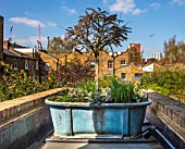 LONDON HOUSE DESIGNED BY JULIE SIMONSEN. SMALL ROOF GARDEN WITH ANTIQUE LEAD TUB FROM MYRIAD ANTIQUES PLANTED WITH WISTERIA