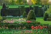 WARDINGTON MANOR, OXFORDSHIRE: SPRING - TULIPS PLANTED FOR CUTTING. GARDEN, YEW, TOPIARY, HEDGES, HEDGING, TAXUS, BEDS, BULBS, COTTAGE