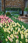 THE LAND GARDENERS, WARDINGTON MANOR, OXFORDSHIRE: TULIPS GROWING IN THE CUTTING GARDEN. WALLED, COUNTRY, ENGLISH, VEGETABLES, POTAGER, BULBS
