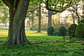 MORTON HALL GARDENS, WORCESTERSHIRE: VIEW OUT TO PARKLAND AT SUNRISE - TREES, LAWN, SUNLIGHT, CLASSIC, GARDEN, COUNTRY, ENGLISH, CHESTNUT TREE, FERNS, STONE, BENCH, SPRING