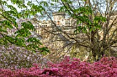 CAERHAYS CASTLE, CORNWALL: VIEW OF THE CASTLE THROUGH A PINK AZALEA. TREE, SPRING, APRIL, ENGLISH, COUNTRY, GARDEN