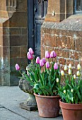 WARDINGTON MANOR, OXFORDSHIRE: THE LAND GARDENERS - SPRING, TULIPS GROWING BESIDE THE FRONT DOOR IN CONTAINERS. CUTTING, FLOWERS, BLOOMING, PETALS, BULBS, APRIL, POTS