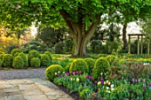 MORTON HALL, WORCESTERSHIRE: THE SOUTH GARDEN WITH TULIPS AND CLIPPED BOX BALLS. MORNING LIGHT, ENGLISH, COUNTRY, GARDEN, APRIL, BORDER, FLOWERS, CHESTNUT, TREE