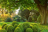 MORTON HALL, WORCESTERSHIRE: THE SOUTH GARDEN WITH CLIPPED BOX BALLS. MORNING LIGHT, ENGLISH, COUNTRY, GARDEN, APRIL, CHESTNUT, TREE