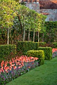 PASHLEY MANOR GARDEN, EAST SUSSEX. SPRING - VIEW TO MANOR HOUSE WITH LAWN AND TULIPS - TULIPA AMAZONE. HEDGE, HEDGES, HEDGING, GARDEN, ENGLISH, APRIL, COUNTRY