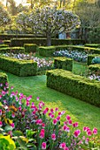 PASHLEY MANOR GARDEN, EAST SUSSEX. SPRING - THE WALLED GARDEN - PATH, BOX HEDGING, BLOSSOM TREES, TULIP DREAMLAND, TULIP ANGELIQUE. TERRACOTTA CONTAINER, HEDGE, HEDGES, APRIL