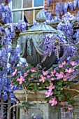 PASHLEY MANOR GARDEN, EAST SUSSEX. SPRING. LEAD URN, CONTAINER WITH WALL, WISTERIA AND CLEMATIS MONTANA RUBENS. PURPLE, PINK, APRIL, ENGLISH, COUNTRY