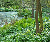 HOLE PARK, KENT: POND, POOL, WOODS, WOODLAND, SPRING, MAY, RANSOMES, WILD, GARLIC, ALLIUM URSINUM, NATURALISED, BULBS, MEADOWS, GREEN, WHITE, FLOWERS, BLOOMS, BLOOMING, FERNS