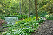HOLE PARK, KENT: PATH, POND, POOL, WOODS, WOODLAND, SPRING, MAY, RANSOMES, WILD, GARLIC, ALLIUM URSINUM, NATURALISED, BULBS, MEADOWS, GREEN, FERNS, MATTEUCIA STRUTHIOPTERIS