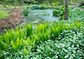 HOLE PARK, KENT: POND, POOL, WOODS, WOODLAND, SPRING, MAY, RANSOMES, WILD, GARLIC, ALLIUM URSINUM, NATURALISED, BULBS, MEADOWS, GREEN, FERNS, MATTEUCIA STRUTHIOPTERIS