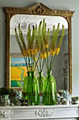 DESIGNER BUTTER WAKEFIELD, LONDON - THE FRONT ROOM - MIRROR ABOVE FIREPLACE WITH  YELLOW FLOWERS OF EREMURUS IN GREEN GLASS JARS, CONTAINERS