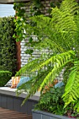 CHELSEA FLOWER SHOW 2017: CITY LIVING GARDEN DESIGNED BY KATE GOULD. MODERN, CONTEMPORARY, FOLIAGE, LIVING, WALL, GREEN, TREE FERN, BASEMENT, DICKSONIA ANTARCTICA