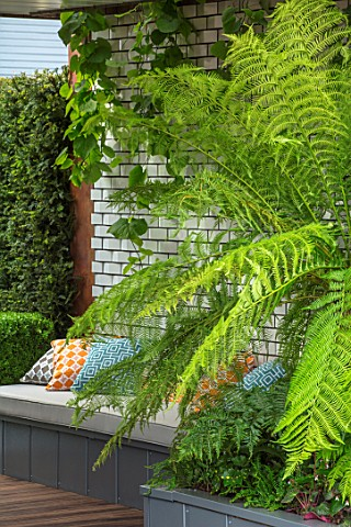 CHELSEA_FLOWER_SHOW_2017_CITY_LIVING_GARDEN_DESIGNED_BY_KATE_GOULD_MODERN_CONTEMPORARY_FOLIAGE_LIVIN