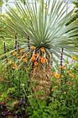 CHELSEA FLOWER SHOW 2017: CITY LIVING GARDEN DESIGNED BY KATE GOULD. PLANT ASSOCIATION, COMBINATION - YUCCA AUSTRALIS AND GEUM PRINSES JULIANA. SPIKES, SPIKEY, FOLIAGE, EXOTIC