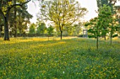 MORTON HALL GARDENS, WORCESTERSHIRE: BUTTERCUPS IN MEADOW WITH MONOPTEROS BEHIND. MORNING, SUNRISE, YELLOW, DRIFT, SPRING, EARLY SUMMER, PARKLAND