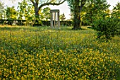 MORTON HALL GARDENS, WORCESTERSHIRE: BUTTERCUPS IN MEADOW WITH MONOPTEROS IN BACKGROUND. MORNING, SUNRISE, YELLOW, DRIFT, SPRING, EARLY SUMMER, PARKLAND, FOLLY