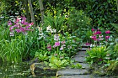 MORTON HALL GARDENS, WORCESTERSHIRE: CANDELABRA PRIMULAS BESIDE THE UPPER POND. POOL, WATER, MAY, SPRING, WOODLAND, SHADE