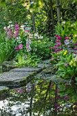 MORTON HALL GARDENS, WORCESTERSHIRE: CANDELABRA PRIMULAS BESIDE THE UPPER POND WITH FLOATING STEPPING STONES, REFLECTIONS, REFLECTED, POOL, WATER, MAY, SPRING, WOODLAND, SHADE