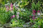 MORTON HALL GARDENS, WORCESTERSHIRE: CANDELABRA PRIMULAS BESIDE THE UPPER POOL, WATER, MAY, SPRING, WOODLAND, SHADE