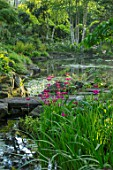 MORTON HALL GARDENS, WORCESTERSHIRE: CANDELABRA PRIMULAS BESIDE THE UPPER POND. STONE BRIDGE, BIRCHES, BETULA, REFLECTIONS, REFLECTED, POOL, WATER, MAY, SPRING, WOODLAND, SHADE