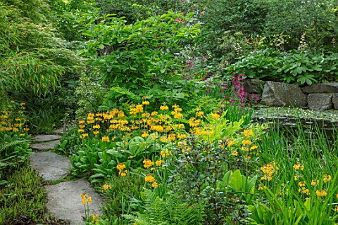 MORTON_HALL_WORCESTERSHIRE_PRIMULA_BULLEYANA_BESIDE_THE_LOWER_POND_STROLL_GARDEN_PERENNIALS_SPRING_Y