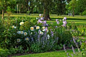 MORTON HALL, WORCESTERSHIRE: SOUTH GARDEN, CLIPPED YOPIARY BOX, LAWN, IRIS ANNABELLE JANE, PAEONIA KRINKLED WHITE. SUMMER, SPRING, HERBACEOUS, BORDERS, PEONY, PEONIES