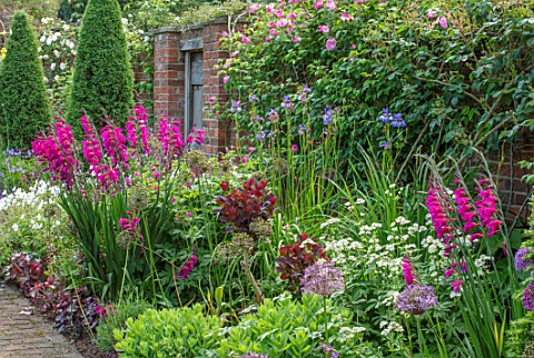 COTTAGE_ROW_DORSET_BRICK_PATH_AND_BORDER_SPRING_ALLIUMS_GLADIOLUS_COMMUNIS_SUBSP_BYZANTINUS_WALL_MOR