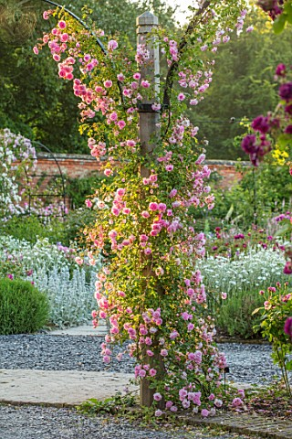 MOTTISFONT_ABBEY_HAMPSHIRE_ARCH_WITH_ROSES__ROSA_DEBUTANTE_AND_ROSA_BLEU_MAGENTA_SUMMER_ROSE_GARDEN_