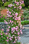 MOTTISFONT ABBEY, HAMPSHIRE: ARCH WITH ROSES - ROSA DEBUTANTE, SUMMER, ROSE, GARDEN, ARCHES, FORMAL, SUMMER, PINK, FLOWERS, FLOWERING, BLOOMS, BLOOMING
