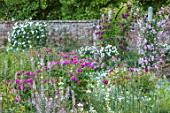 MOTTISFONT ABBEY, HAMPSHIRE: PINK, WHITE, FLOWERED, FLOWERS, ROSES, WALLS, WALLED, AGREDN, SUMMER, PERGOLAS, ARCHES