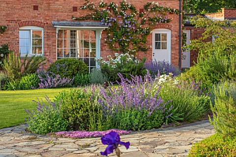 MORTON_HALL_WORCESTERSHIRE_THE_WEST_GARDEN__LAWN_ROSA_CLARENCE_HOUSE_ON_WALL_ROSA_KEW_GARDENS_NEPETA