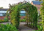 MORTON HALL, WORCESTERSHIRE: THE KITCHEN GARDEN, JUNE. ARCH IN VEGETABLE GARDEN WITH CLEMATIS TANGUTICA LAMBTON PARK. CLIMBER, CLIMBING, SUMMER, ARCHWAY