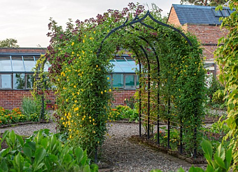MORTON_HALL_WORCESTERSHIRE_THE_KITCHEN_GARDEN_JUNE_ARCH_IN_VEGETABLE_GARDEN_WITH_CLEMATIS_TANGUTICA_