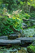 MORTON HALL, WORCESTERSHIRE: STEPPING STONES OVER WATER WITH RODGERSIA SAMBUCIFOLIA, PERENNIALS, SUMMER, WOODLAND, POND, MOSITURE LOVING, BOG, PLANTS